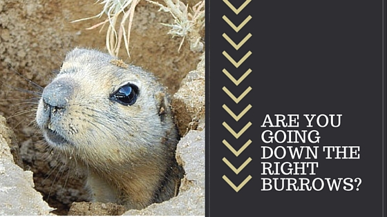 Are You Going Down The Right Burrows?